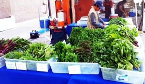 GT Florists & Herbs